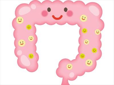 腸内に生息している細菌群
